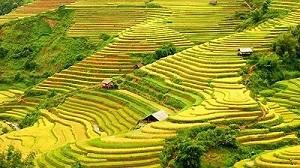 Hoang Su Phi, Ha Giang Province, Vietnam