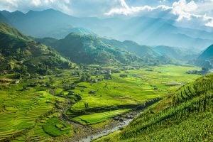 rice season in Sapa
