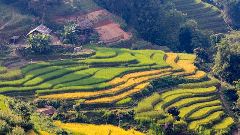 Hoang Su Phi rice terraced fields - a high mountain area