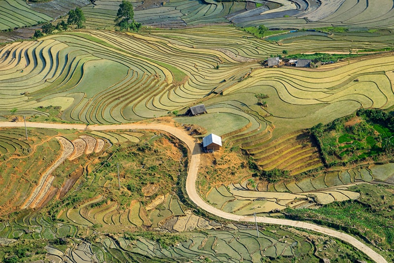 Hoang Su Phi rice terraced fields