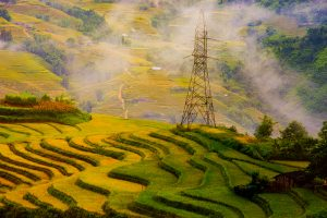 Muong Hoa Valley in ripe rice season is rather beautiful, quite romantic for visitors to come and see