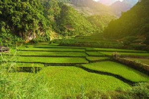 Green Terraced Rice Field in Mai Chau